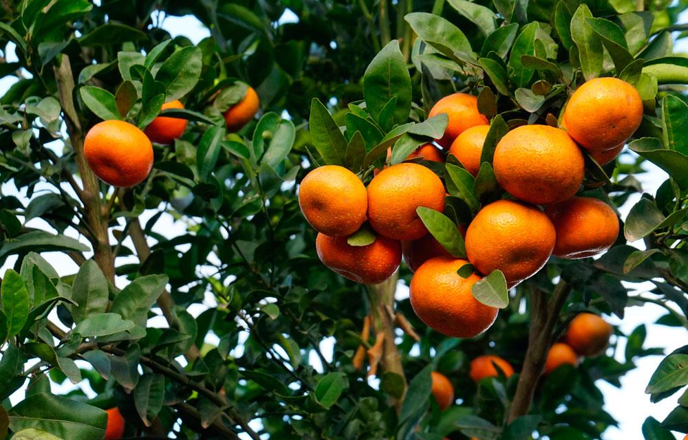 Abonos y fitosanitarios ecológicos certificados bajo la Norma UNE