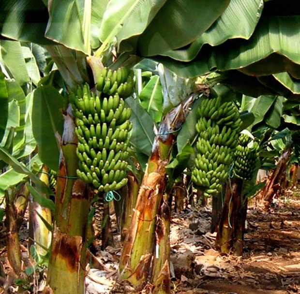 Productos para aumentar el tama o de las frutas el - Cuando plantar frutales ...