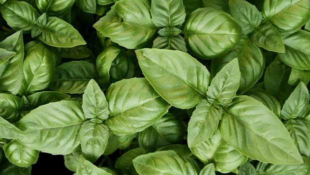 plantas arom ticas para el huerto urbano el huerto