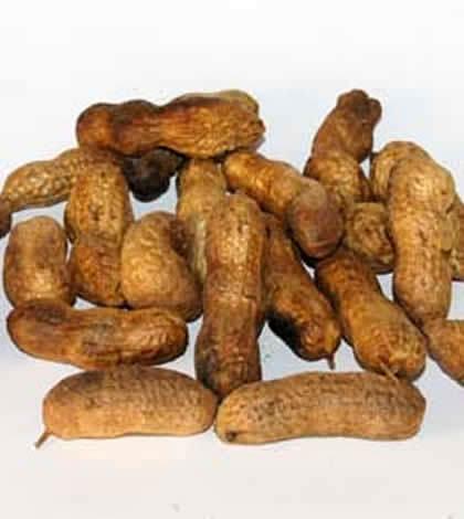 El cacahuete