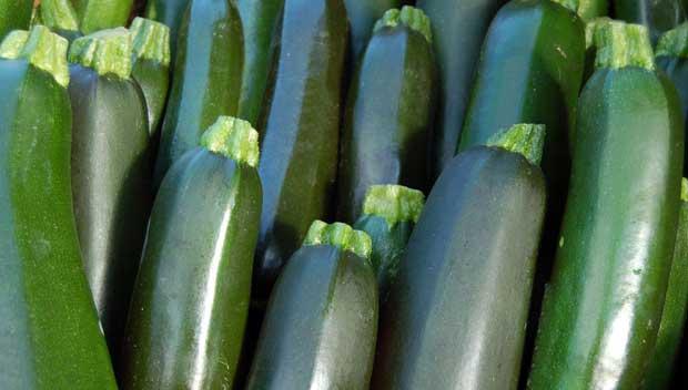 Beneficios nutricionales del Calabacín