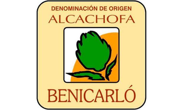 Alcachofa de Benicarló / Carxofa de Benicarló