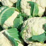 Informe técnico para el cultivo de la coliflor