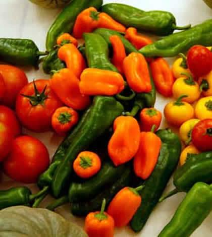 Cómo cultivar las hortalizas