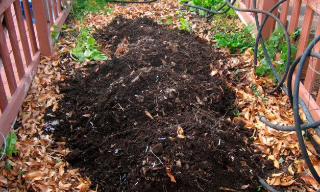 Compost orgánico para el huerto