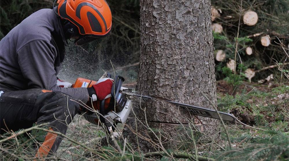 Cortar un árbol con motosierra