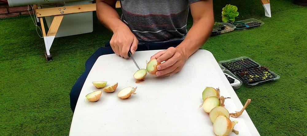 Cortar con cuchillo la base de las cebollas