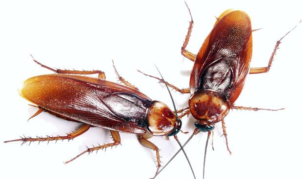Cómo combatir insectos voladores y rastreros de tu huerto y jardín