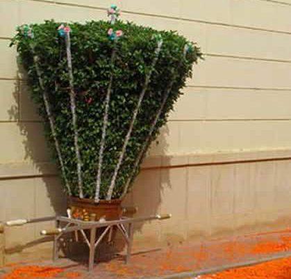 Cultivo de albahacas gigantes