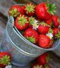 Cultivo de fresas con éxito