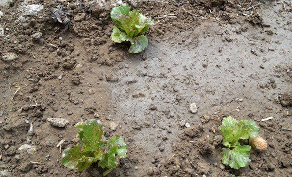 Corregir la materia orgánica y salinidad en los suelos