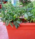 cultivo horticolas en jardineras