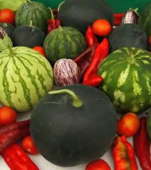 engorde-de-frutos-horticolas