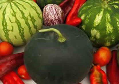 Engormax, abono para engorde de frutos