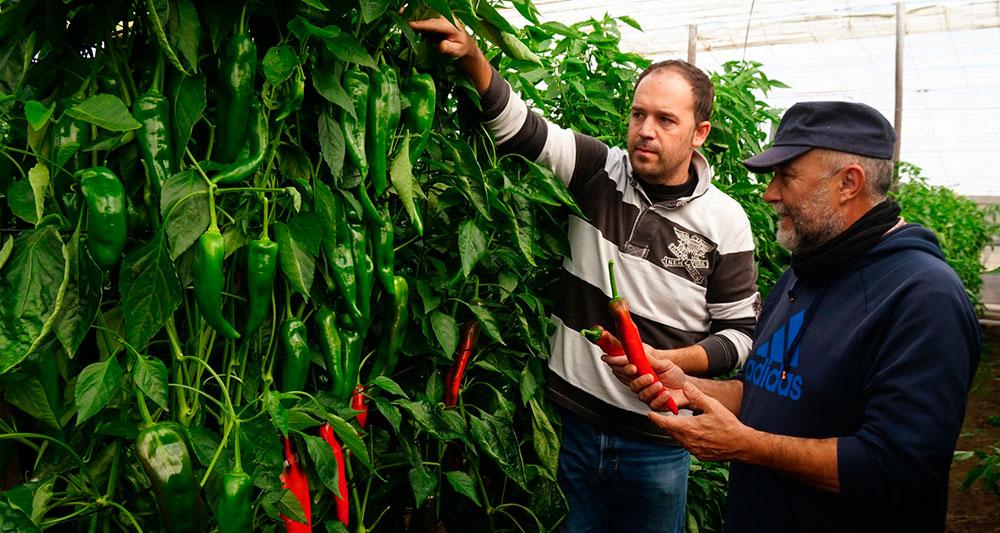 Investigación sobre semillas híbridas