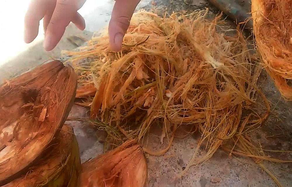 Fibra de coco para sustratos