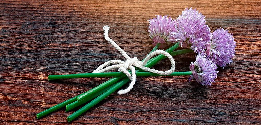 Flores del cebollino