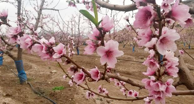 Bioestimulantes para floración y cuajado de frutos