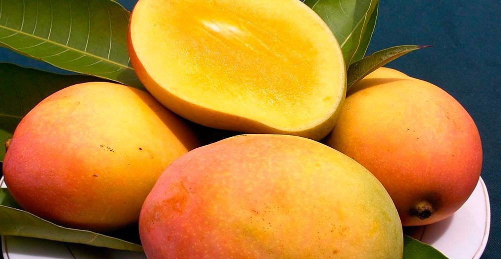 Frutos del mango