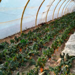 Inversión térmica en invernaderos