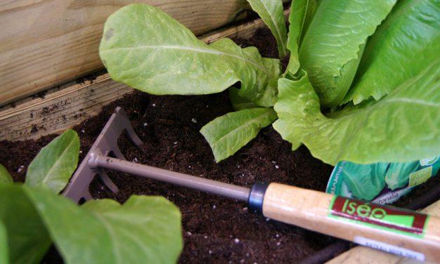 Productos y herramientas para mi huerto urbano