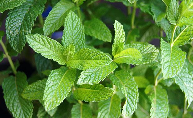 Plantas que ayudan a purificar el aire de casa