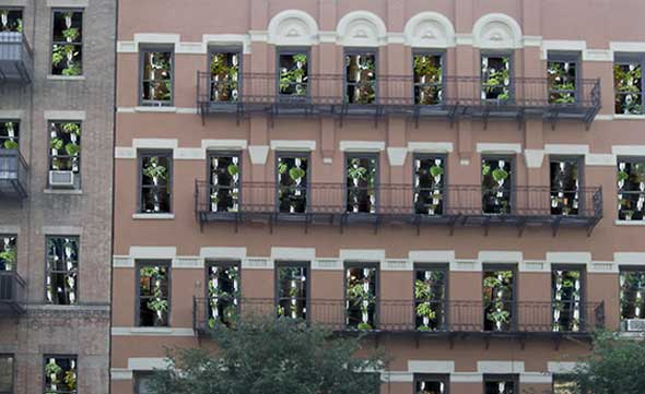 Windowfarms, las huertas urbanas