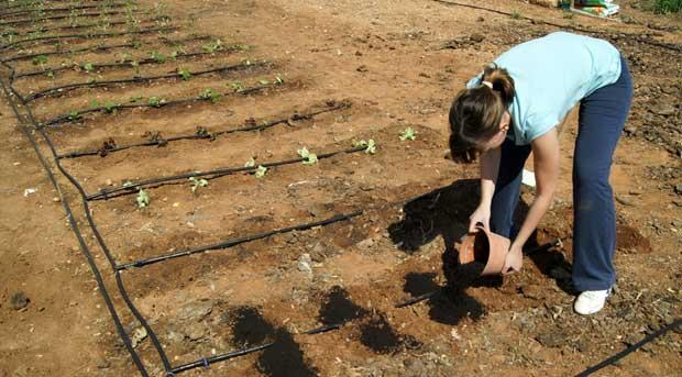 Fertilizantes y Fitosanitarios en el huerto urbano