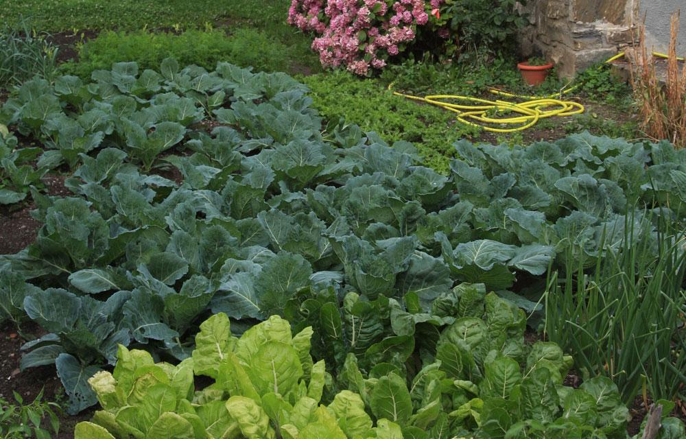Huerto urbano en el jardín
