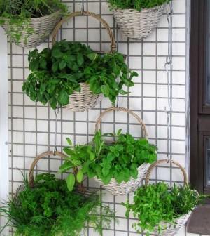 Jardines verticales propuestas para huertos urbanos el for Jardines urbanos en terrazas