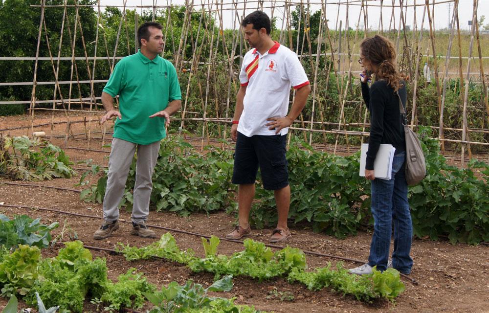 Informes técnicos para cultivos