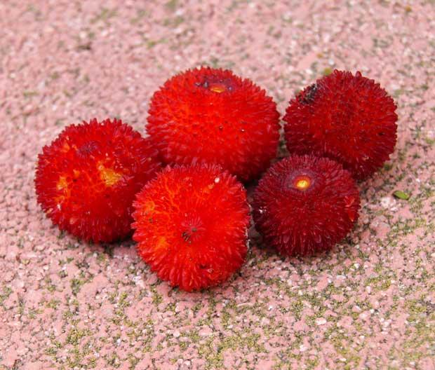 Frutos de madroño