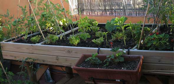 Mesas de cultivo para el huerto en casa el huerto urbano el huerto en casa - Pequeno huerto en casa ...