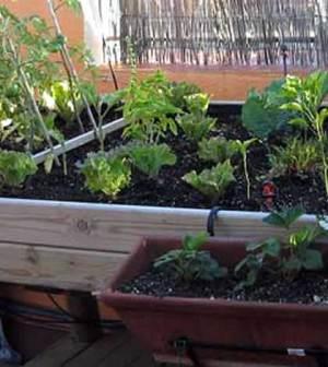 mesas-de-cultivo-para-el-huerto-en-casa
