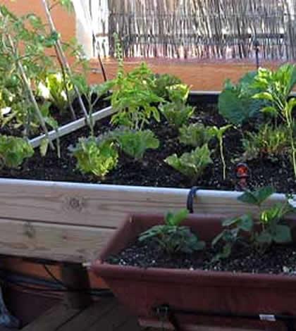 Mesas de cultivo para el huerto en casa