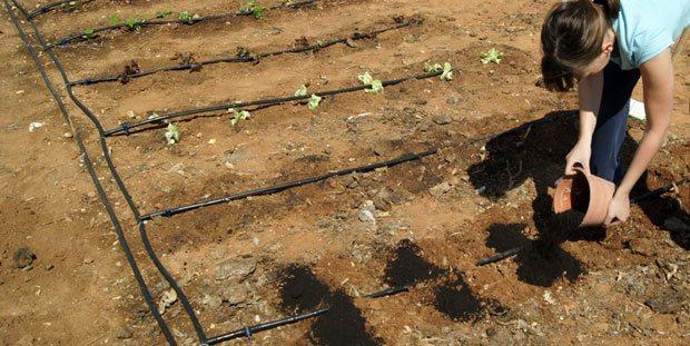 Microorganismos en fertilizantes e insecticidas
