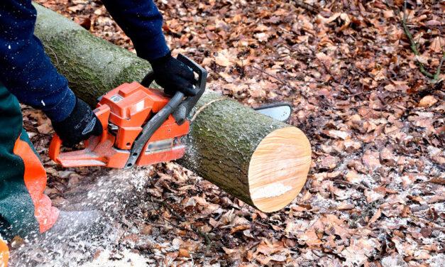 Cómo usar una motosierra para cortar árboles