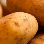 Informe técnico para el cultivo de la patata