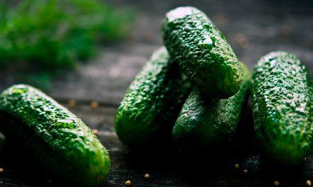 Informe técnico para el cultivo del pepino