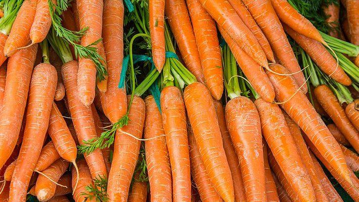 Plagas y enfermedades de la zanahoria
