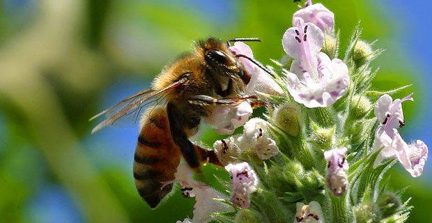 Polinización de flores por abejas