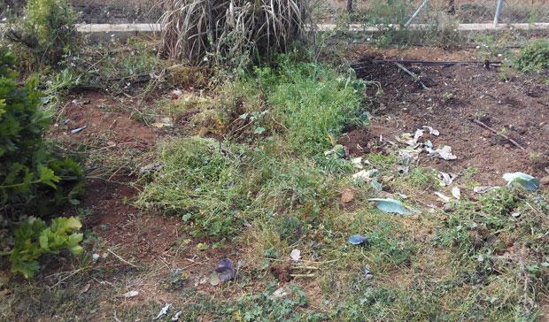 Limpieza del huerto de hierbas y cultivos anteriores