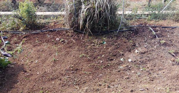 Retirada del huerto de hierbas y cultivos anteriores