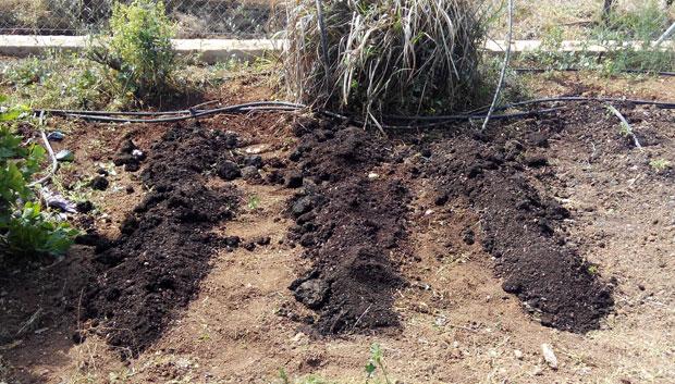 Aporte de compost al huerto