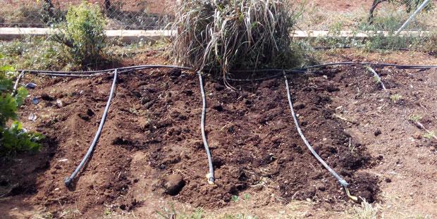 Remover la tierra del huerto