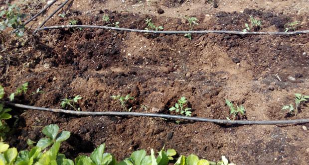 Preparación del huerto para la plantación paso a paso