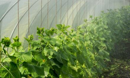 Cómo proteger al cultivo de los golpes de calor