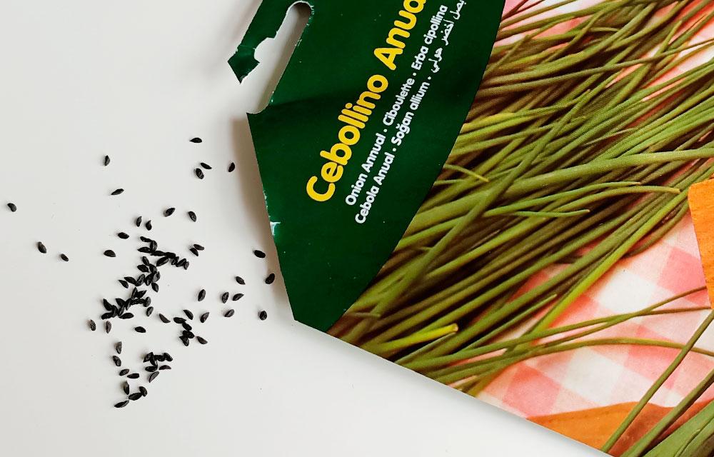 Cómo hacer un semillero de cebollino