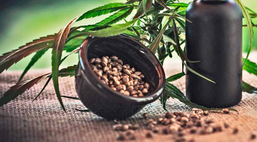 Semillas de marihuana autoflorescientes