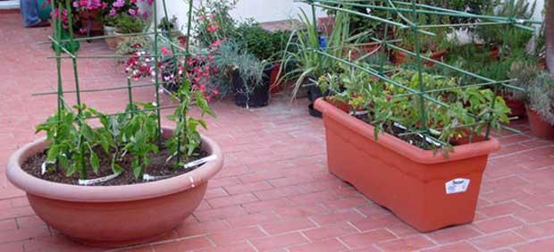 jardineras en huerto urbano